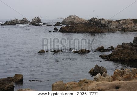 This is an image of coastal rocks, water and birds at Pacific Grove, California.