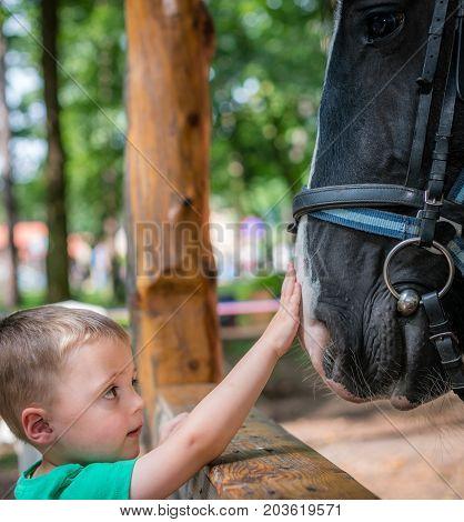Cute little caucasian boy touching the black horse head