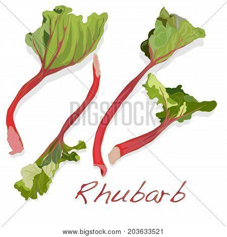 Fresh Rhubarb Isolated On White