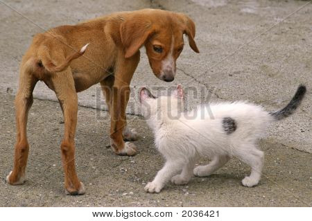 Skinny Dog And White Cat