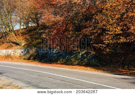 Road Through The Forest With Red Foliage