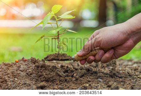 Hand holding small shuffle has little tree on it ready to be planted growing tree planting tree on soil