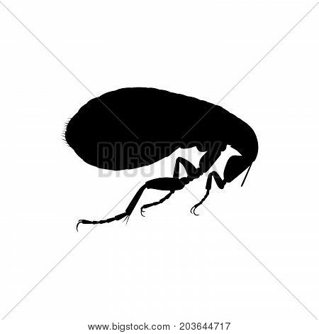 Human flea, insect ( shade picture )