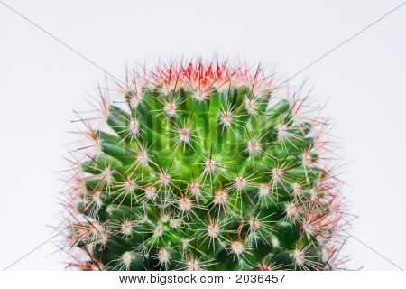 Small green round shaped cactus with red thorns against white background poster