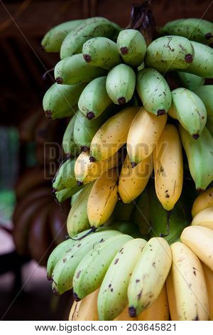 A cluster of ripening bananas or plantains for sale on a fruit stand in Siem Riep Cambodia. poster