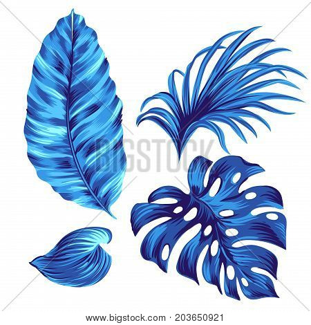vector amazing tropical leaves, a set of tropical graphic elements, artistic illustrations of tropical plants.