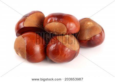 chestnut isolated on white background close up.