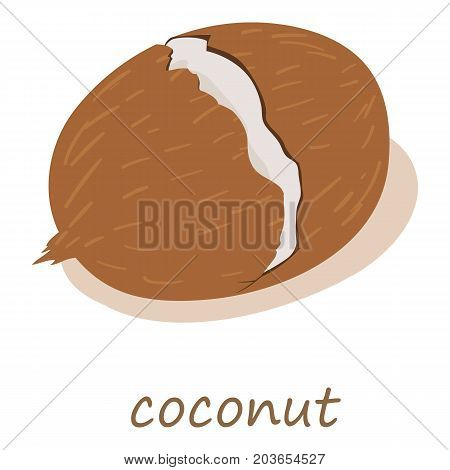 Coconut icon. Isometric illustration of coconut vector icon for web