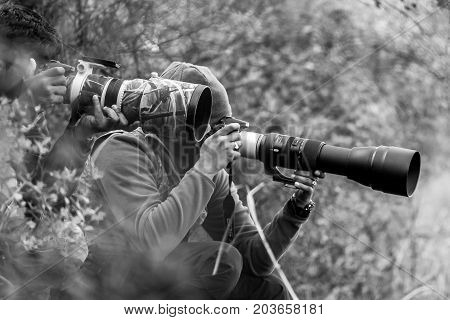 Professional wildlife photographer in forest with very long canon and nikon lenses taking photos of bird