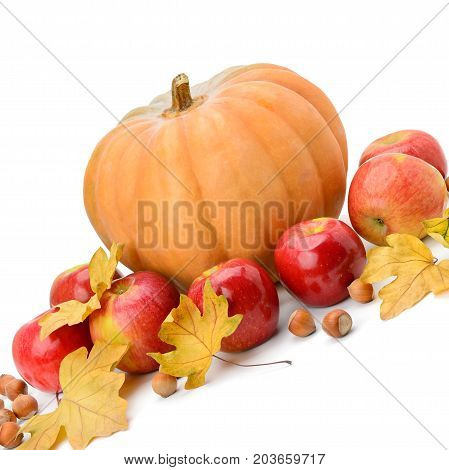 Pumpkin apples and hazel isolated on white background