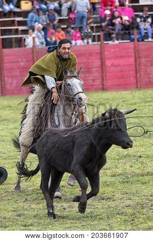 June 10 2017 Toacazo Ecuador: andean cowboy throwing a lasso on a bull