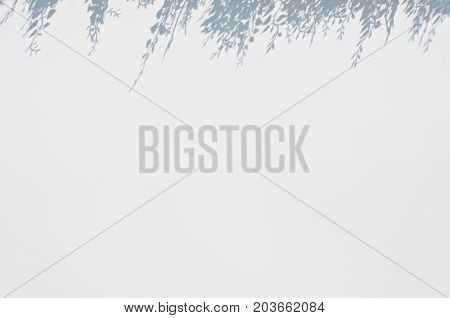 white blur background with flower shadow above