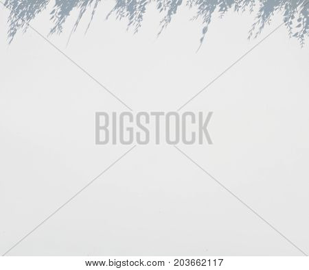 white blur background with grass above as shadow