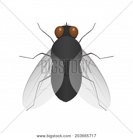 Colorful fly icon. Insect. Vector illustration in a flat style.