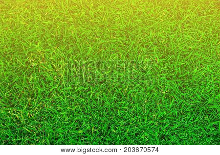 Top view of green grass and the sun shines on the side.
