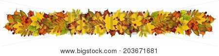 Autumn garland fron colorful leaves and berries isolated on white