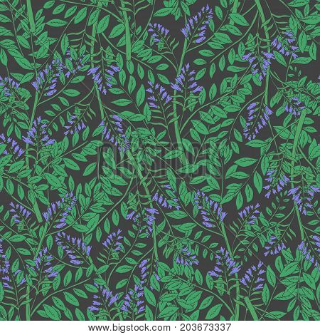 Elegant floral seamless pattern with licorice inflorescences, stems and leaves. Beautiful blooming purple flowers hand drawn in antique style on dark background. Botanical vector illustration