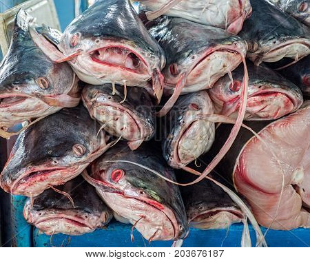 Stack Of Fish For Sale