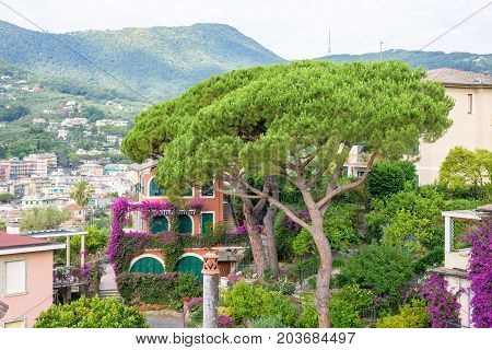 Beautiful daylight view to a green tree and Santa Margherita Ligure city in Italy.