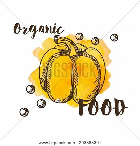 Whole yellow paprika. vector doodle style on a watercolor background, text organic food