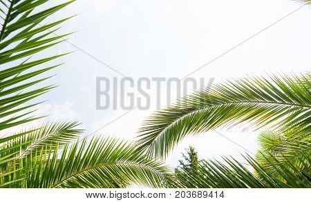 Palm trees against blue sky, Palm trees at tropical coast, vintage toned and stylized, coconut tree,summer tree ,retro