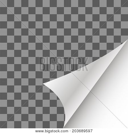 Paper Page Curl with Shadow on Checkered Background