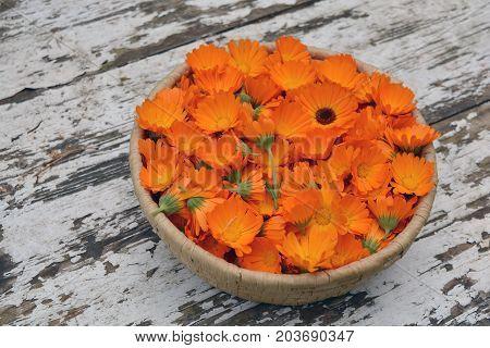 Marigold calendula medical flowers basket on old wooden garden table background