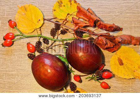 Autumn Still Life Plum, Catkin, Brier And Stone On Wooden Background
