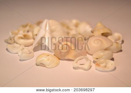 Some seashells on a white background, seashells