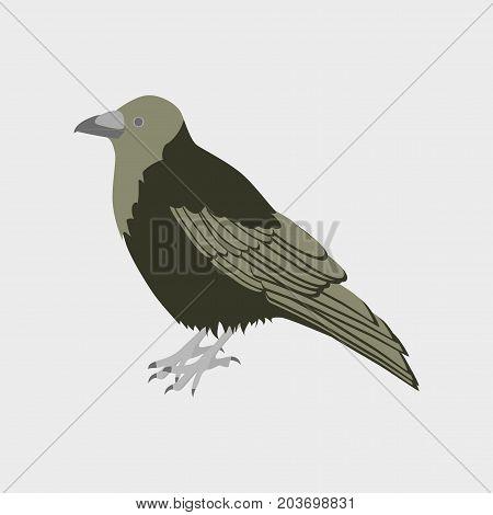 Vector illustration in flat style raven fauna