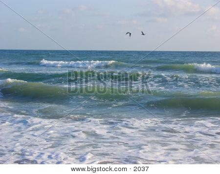 Pelican Pair
