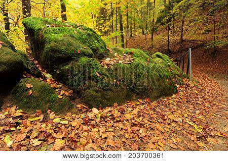 Beautiful autumn color forest with leaves and foliage
