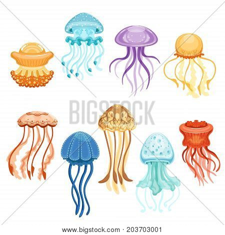 Colorful jellyfish set, swimming marine creatures watercolor vector Illustrations on a white background
