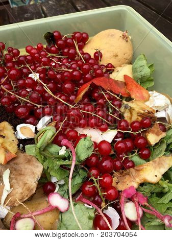 Fresh organic rubbish with red currants in a small plastic bucket for recycling