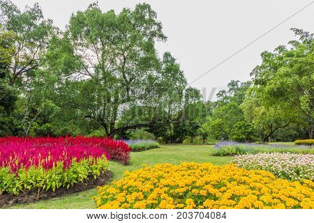 Park with trees and grass along the corridor with a beautiful flower.