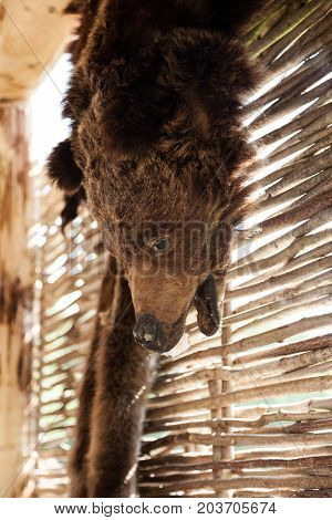 Brown Bear Pelt Hanged On A Wall. Hunters Or Poachers Trophy