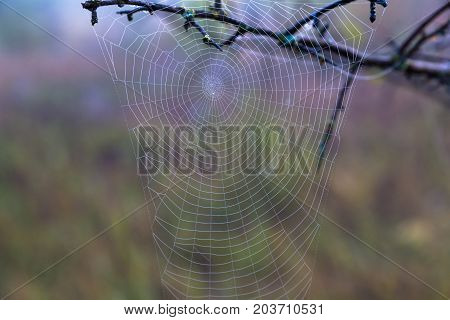 spiderweb in drops of morning dew on the natural blurred background. autumn came