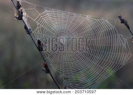 close-up spiderweb in drops of morning dew on the natural blurred background. Concept seasons