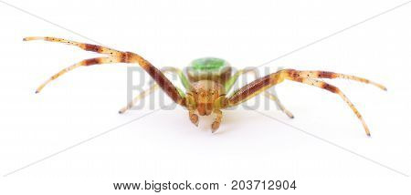 Green spider isolated on a white background.