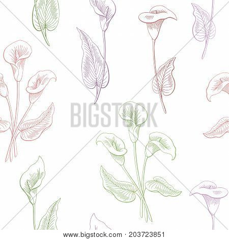 Callas flower graphic color seamless pattern sketch illustration vector