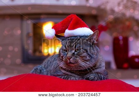 Grey cat by the fireplace. Seated Gray Cat with Santa hat and a fireplace. Christmas cat by the fireplace.