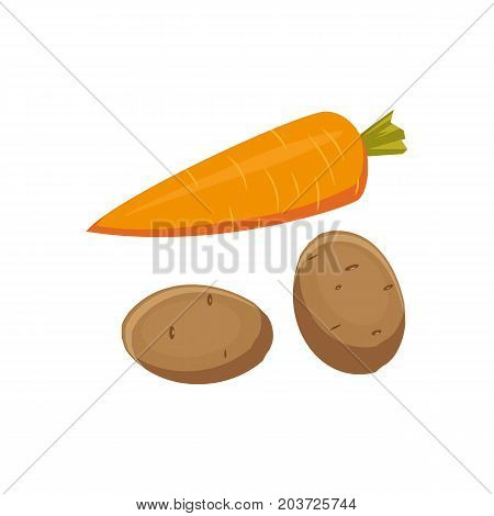 Cartoon style whole raw carrot and potato vegetable, vector illustration isolated on white background. Cartoon style whole, uncut carrot and potato, farm product, autumn harvest