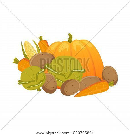 Heap, pile, group of autumn vegetables - carrot, pumpkim, corn, cabbage, potato, cartoon vector illustration isolated on white background. Cartoon vegetables - carrot, pumpkim, corn, cabbage, potato