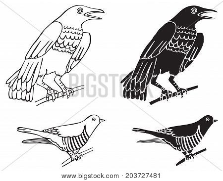 illustration on white background bird crows and the cuckoo on the branch