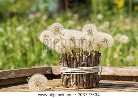A beautiful bouquet of white round dandelions in a homemade vase of twigs on a wooden table in the garden against a blue sky background