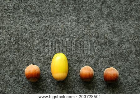 Beeing different with three hazelnuts and a green acorn in a row