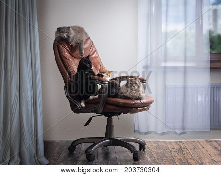 lot of cats and a dog in one chair. A cosy room. The concept the contents of the different animals in the apartment hotel animal shelter