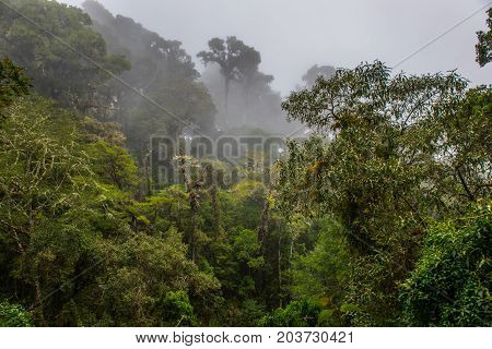 Fog in the cloud forest in Los Quetzales national park Costa Rica