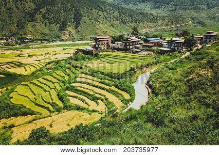 Bhutanese Village And Terraced Field At Punakha, Bhutan