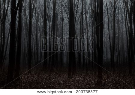 Beautiful forest with fog. Beauty nature background